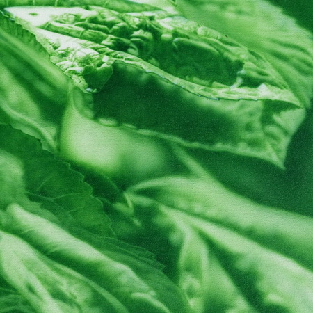 green, close up, detail, summer, sun, handmade, art, airbrush, photorealistic, canvas, painting, leaf, tamas mike